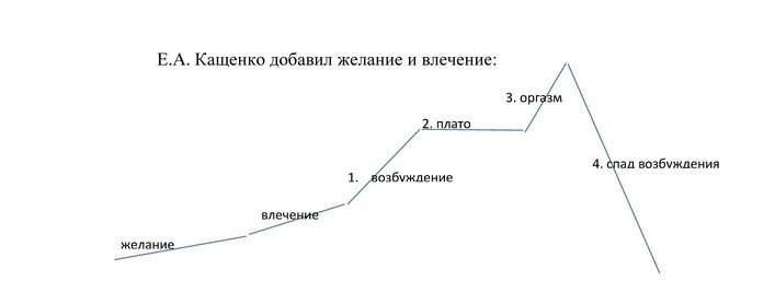 фазы копулятивного цикла