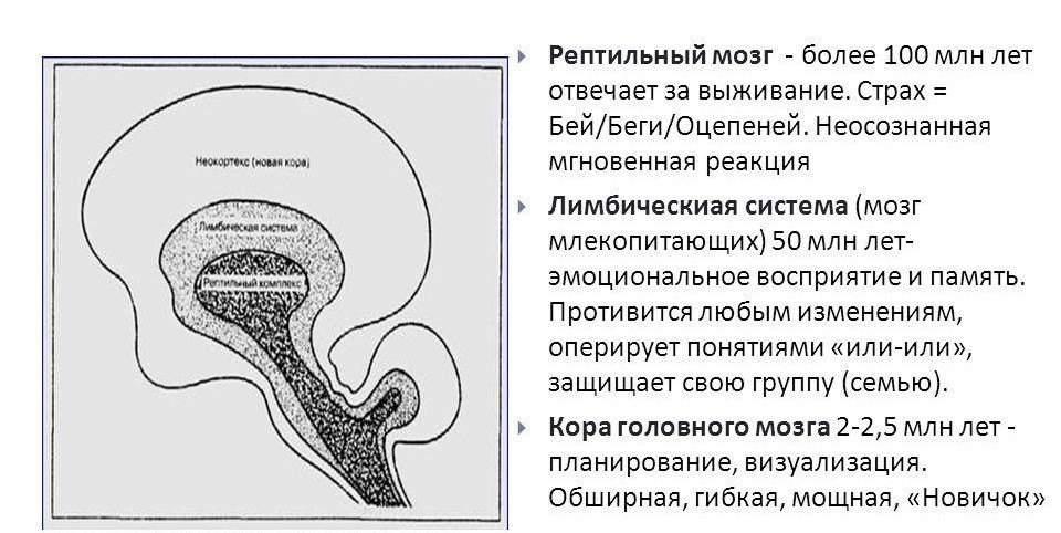 mozg3